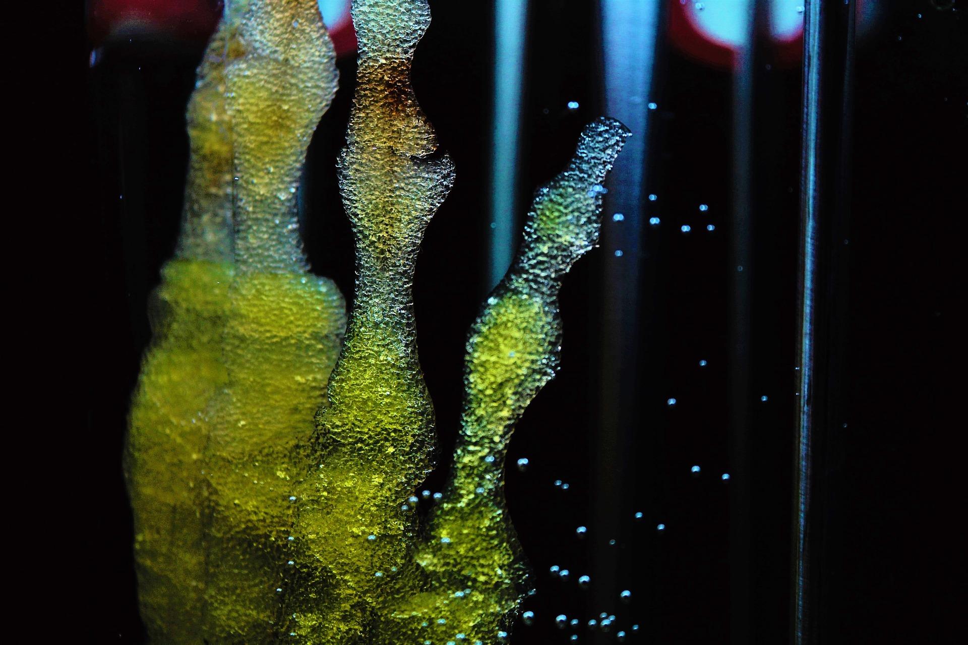 Einzelne Stammzellen, welche aus dem 3D Biodrucker gedruckt wurden